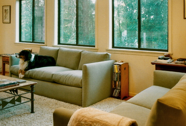 heavy duty sofas, easy to clean, durable, practical with dogs